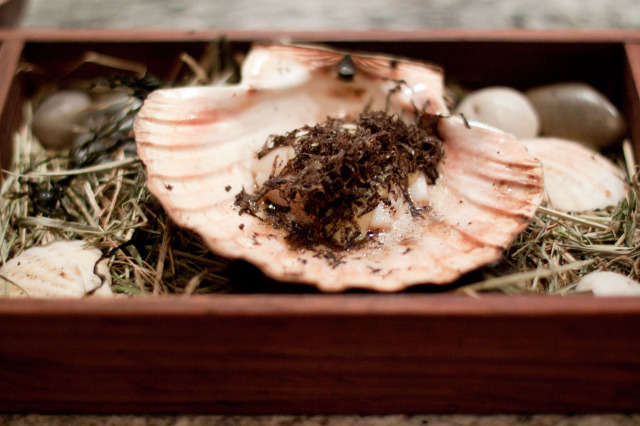 Scallop with Tuber Melanosporum Witt